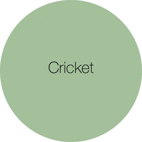 Cricket - EarthbornEggshell